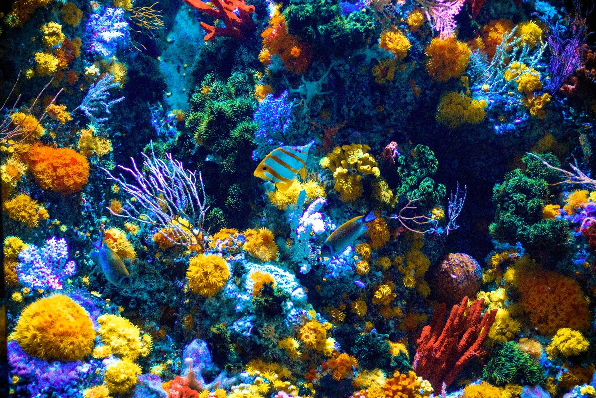 Najpiękniejsze rafy koralowe na świecie