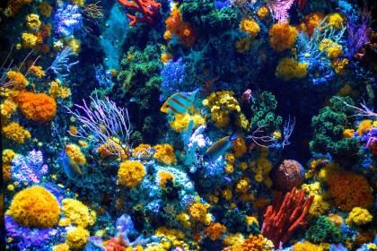 Gdzie znaleźć Najpiękniejsze rafy koralowe na świecie